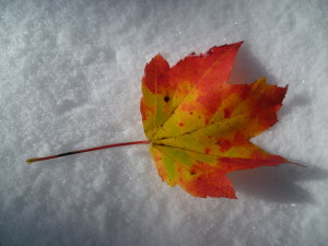 Autumn in the Snow